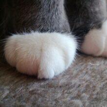 Paws = Pause, geddit